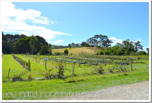 Bruny Island Berry Farm | How Many More Minutes?