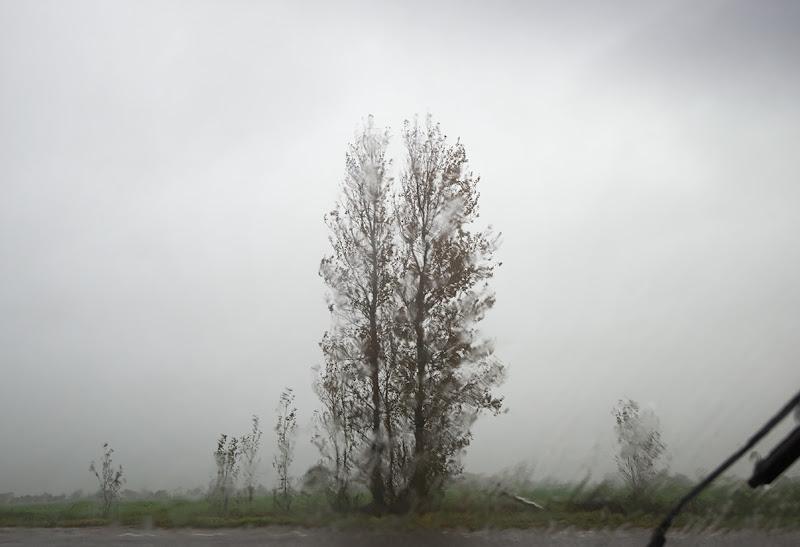 18_131031_DSC7153 Bognor rain and trees ecopy