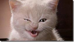 77- gatos blanco o crema (1)- buscoimagenes