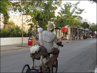 ostrich on bike