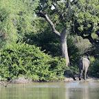 Kanga Camp, Elefant am Wasser © Foto: Ulrike Pârvu | Outback Africa Erlebnisreisen