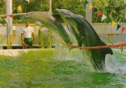 ermenonville dauphin