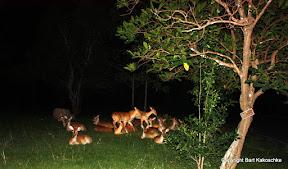 Khao Kheow Open Zoo Night Safari