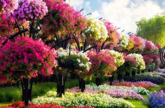 Сад-чудес-Dubai