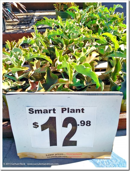 Wednesday Vignette: Smart Plants