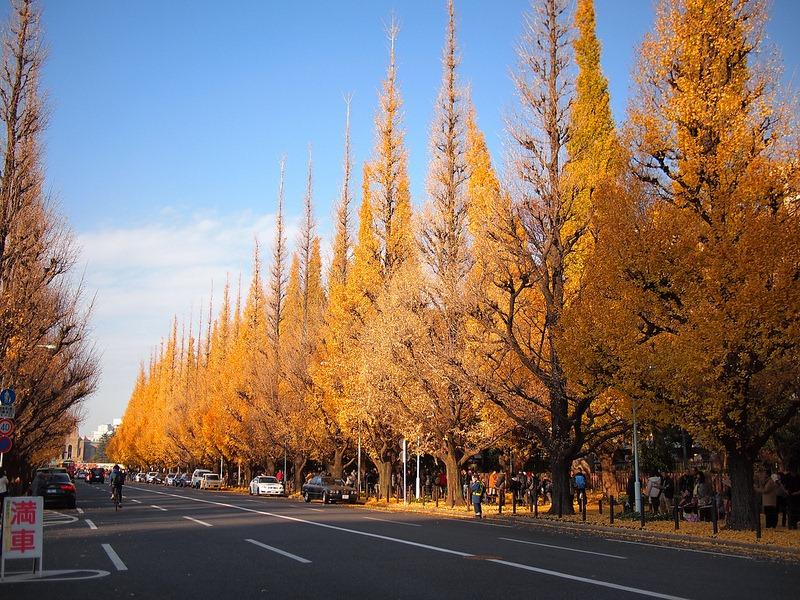 ginkgo-avenue-tokyo-10