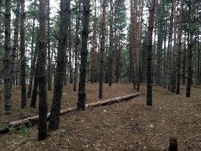 лес17.jpg