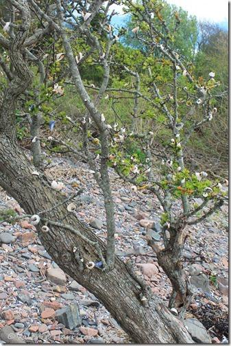 11-shell-tree