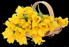 tulip clipart (35)