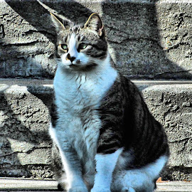 by Don Mann - Animals - Cats Portraits