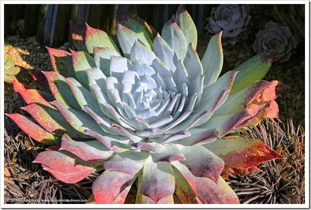 150926_SucculentExtravaganza_204