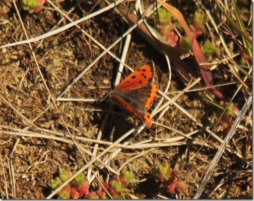 7-Small-Copper
