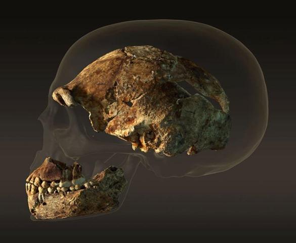 مقارنة جمجة الهومو بجمجمة الإنسان المعاصر