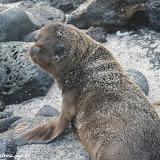 Cadê a mamãe? - Galápagos