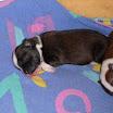 Archie 13-12-08.JPG