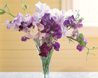 Picture from http://greeneflorist.com/blog/sweet-peas-a-fragrant-surprise-155/