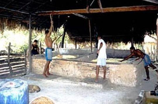 Produzione di farina di mandioca - Cedral, Maranhao