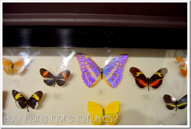 Australian Butterfly Sanctuary | How Many More Minutes?