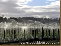 Влияние влаги на рост и развитие виноградного куста