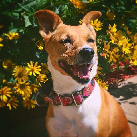 happy dog with yellow flowers