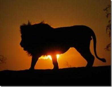 safari___leao_turismo