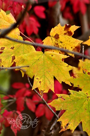 cr-red-yellow-leaves