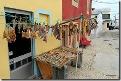 peixe seco (3)