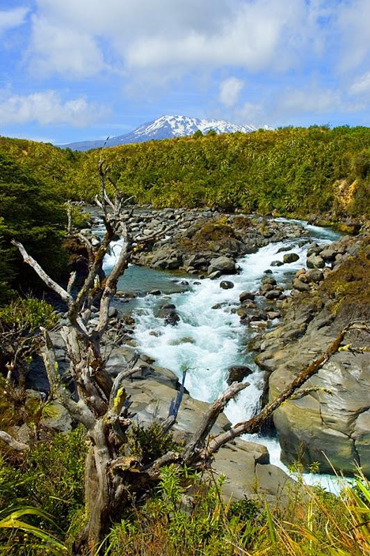 Tongariro_Mahuia_River_n