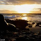 Leão Adormecido - Galápagos