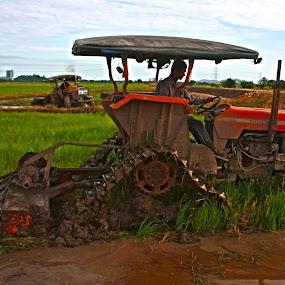 Harvest  by Mohd Rashidin Ideres - Transportation Other ( kedah, paddy harvest, paddy tractor, paddy, kubang semang )