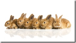 Convivenza con il coniglio