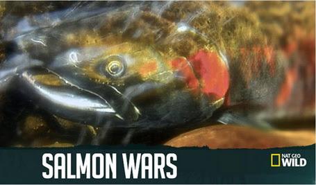 £ososiowe wojny / Salmon Wars (2011) PL.TVRip.XviD / Lektor PL
