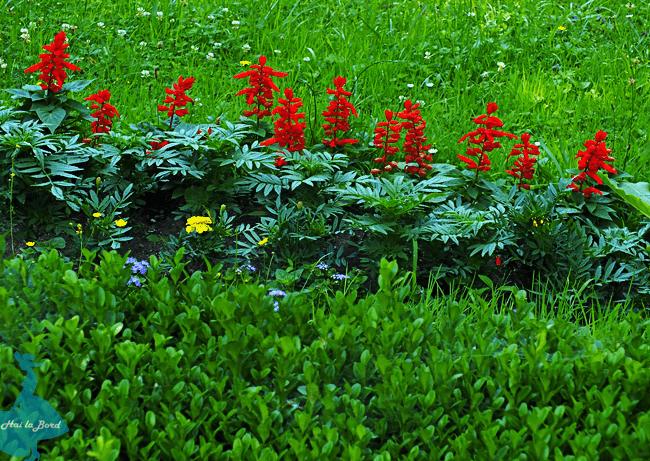 flori gradina botanica cluj