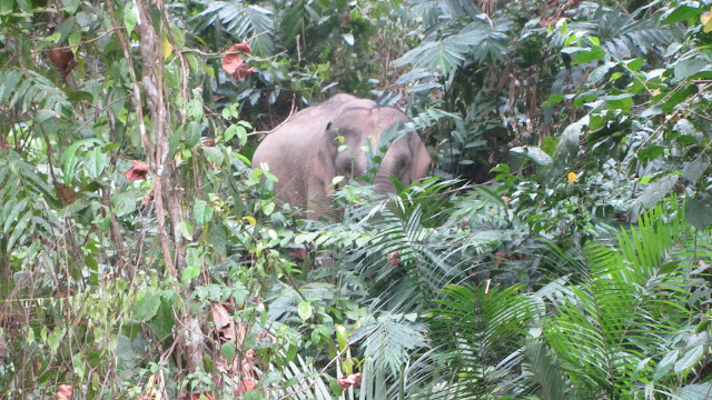First sighting of a wild elephant!