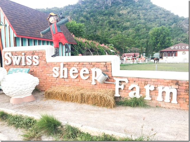 Huahin swiss sheep farm