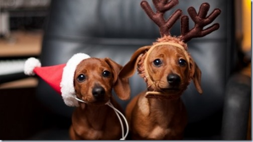 perro navidad (19)