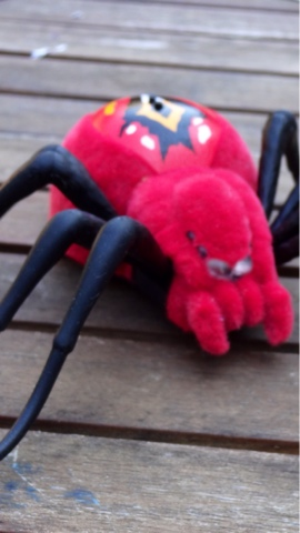 Wild Pets Spider Review