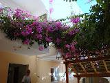 De tuin van hotel Poseidon.
