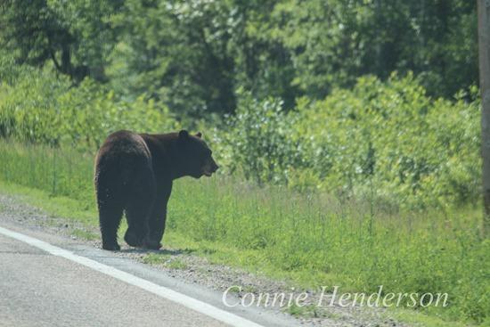 Bear June 19