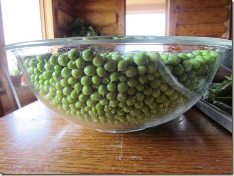 peas 169
