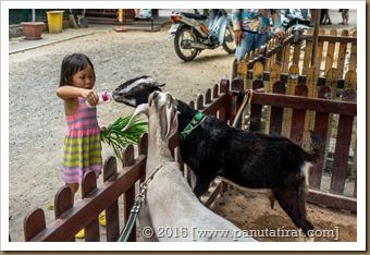 Pattaya 0815-01868