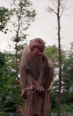 2000.06.12-136.21 la forêt des singes