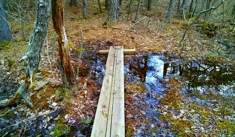 4-17-15 bridge in the woods BrunswickTownCommons