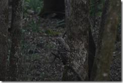 Owl-1