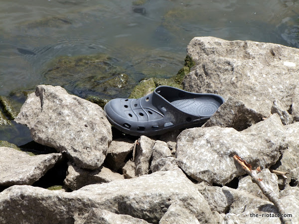 lake burley griffin lost croc