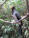 A pretty bird at the Nashville Zoo 09032011b