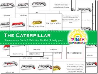 Caterpillar 3-part nomenclature cards