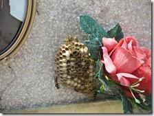 Nido di vespe sulla tomba