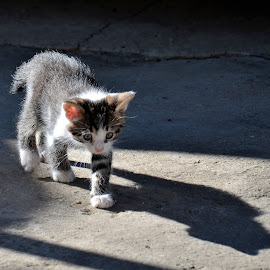 First step outside by Catalin Catai - Animals - Cats Kittens
