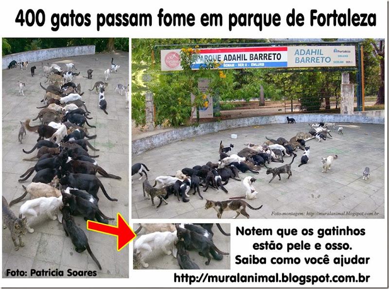 400gatos-fortaleza